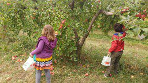 shelburne-orchard
